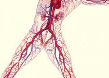 venele vasculare